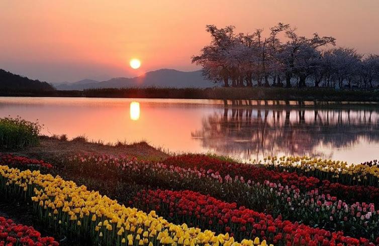 Flowers arrangement on canal