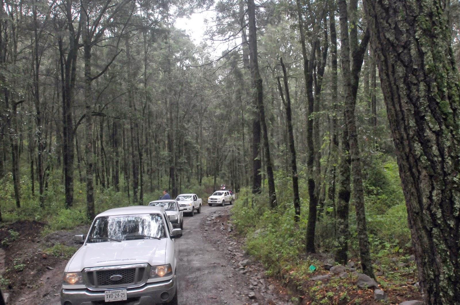 News graphic bosque de las luci rnagas en nanacamilpa Espectaculo de luciernagas en tlaxcala