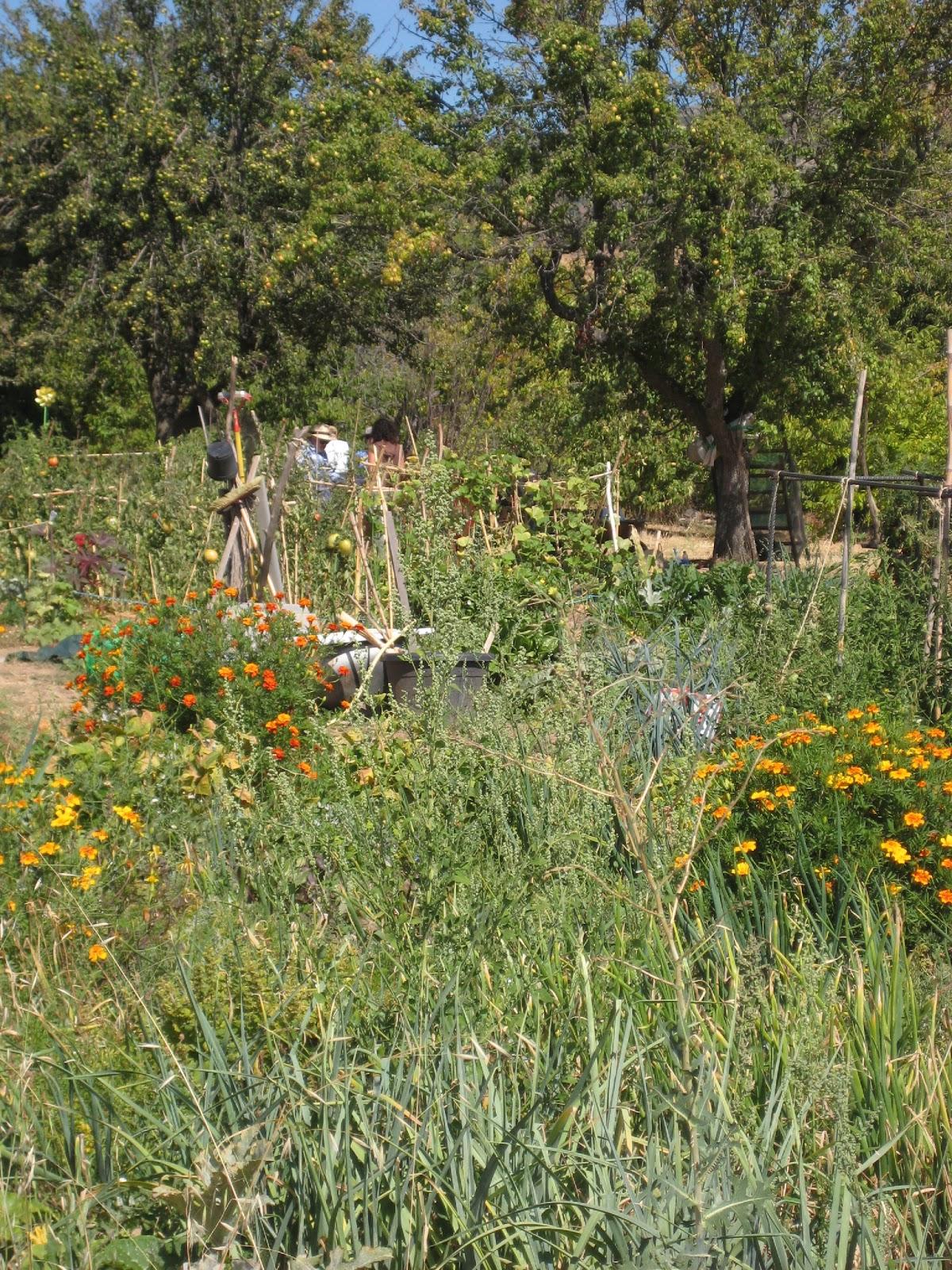 Entorno escorial todo sobre las plantas medicinales en el - Plantas de huerto ...