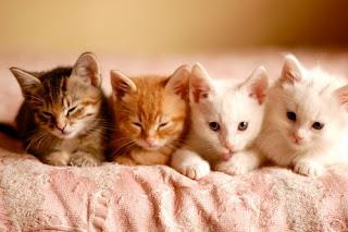 kitties in a row
