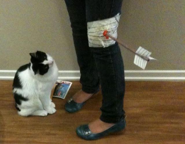 Funny cats - part 61 (30 pics + 10 gifs), cat pis, funny pics, funny cat, cat photos