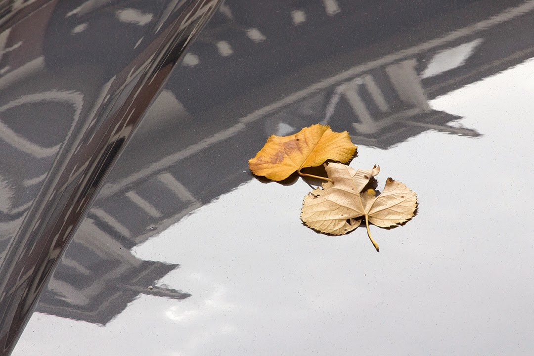 two yellow leaves on grey car
