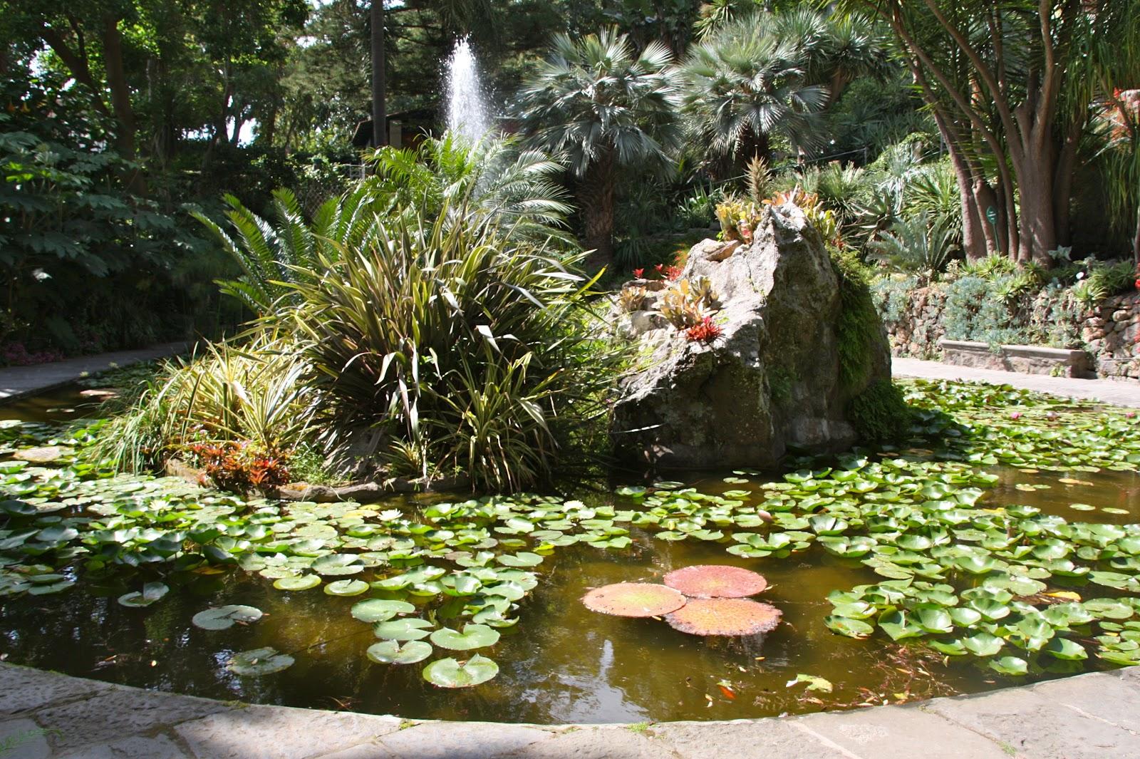 Jardines con orquideas y bromelias for Estanque pequeno