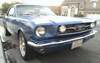 LeLus Mustang