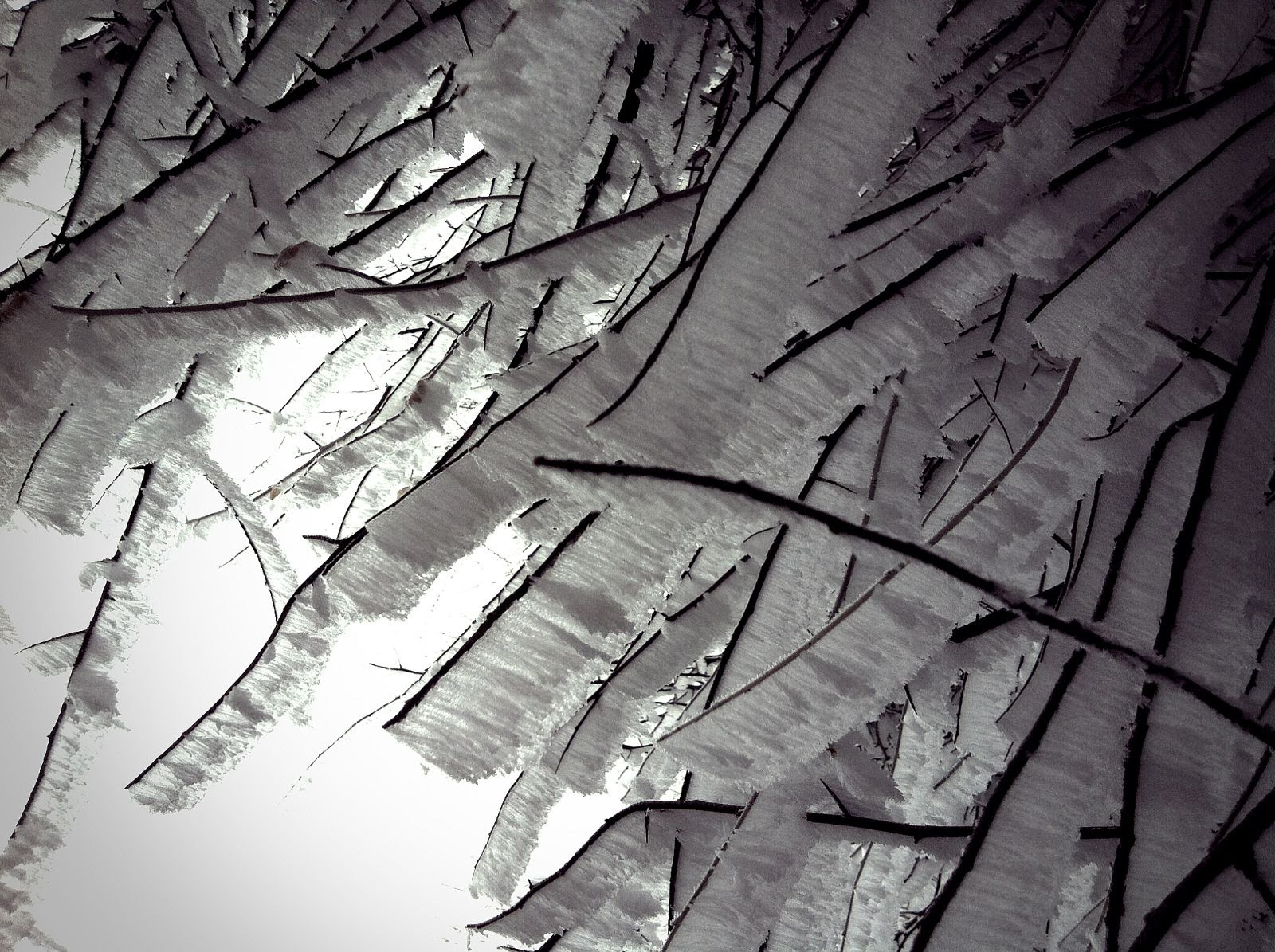Frosted Stems, photo by Lorie Klahn (c)