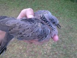 Macam-macam penyakit yang sering menyerang burung