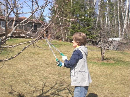 pruning apple trees pictures. pruning the fruit trees.