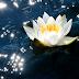 Creando Abundancia: 22 días de Pensamientos y Mantras de Deepak Chopra