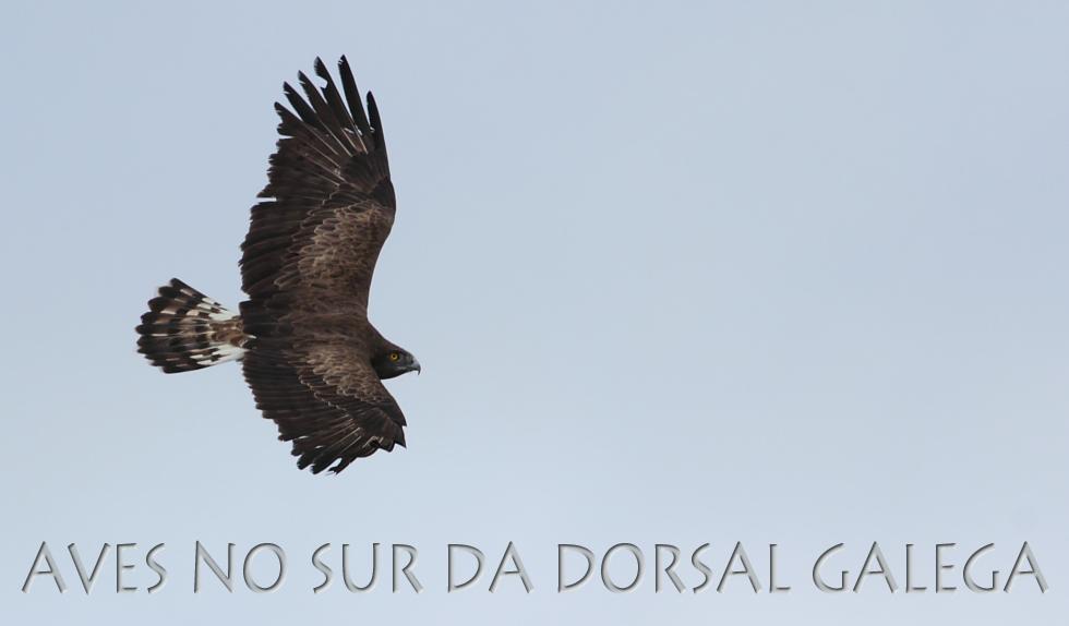 AVES NO SUR DA DORSAL GALEGA