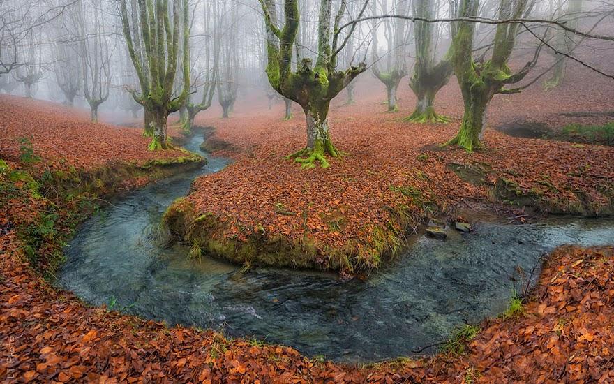 تحكي جمال وروعة الخريف autumn8.jpg