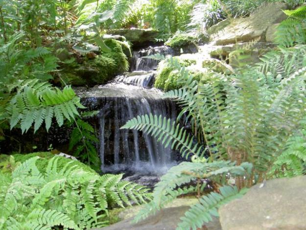 Forest Landscape Garden Design  Home Improvement and Remodeling Ideas