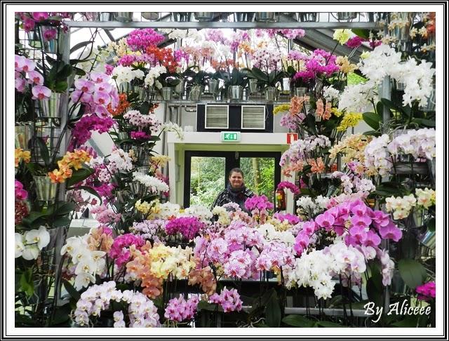 Pavilion-orhidee-olanda-keukenhof