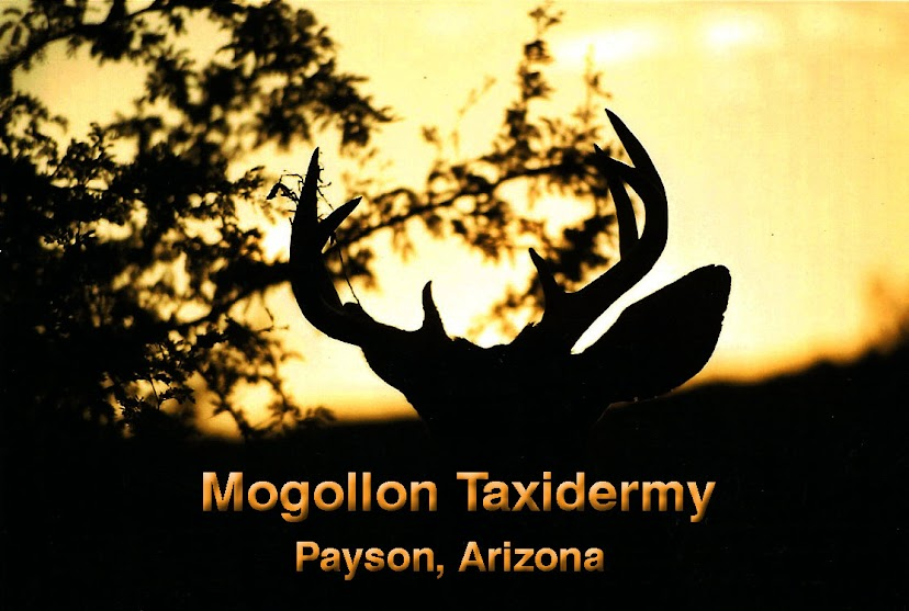 Mogollon Taxidermy