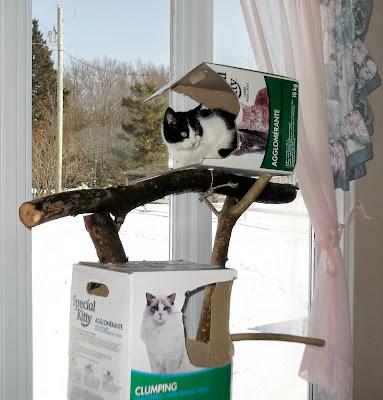 tux cat likes cat tree