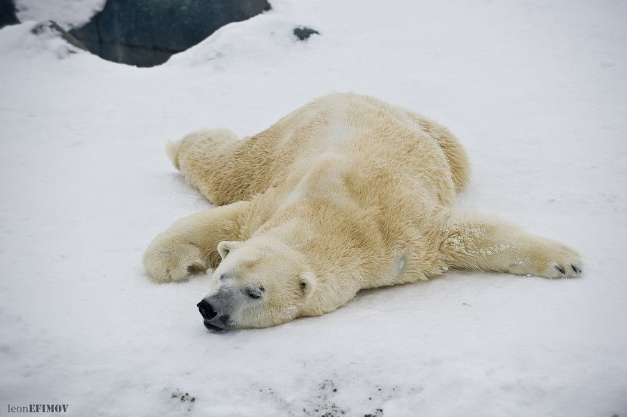 7. Sleeping Polar by Leon Efimov