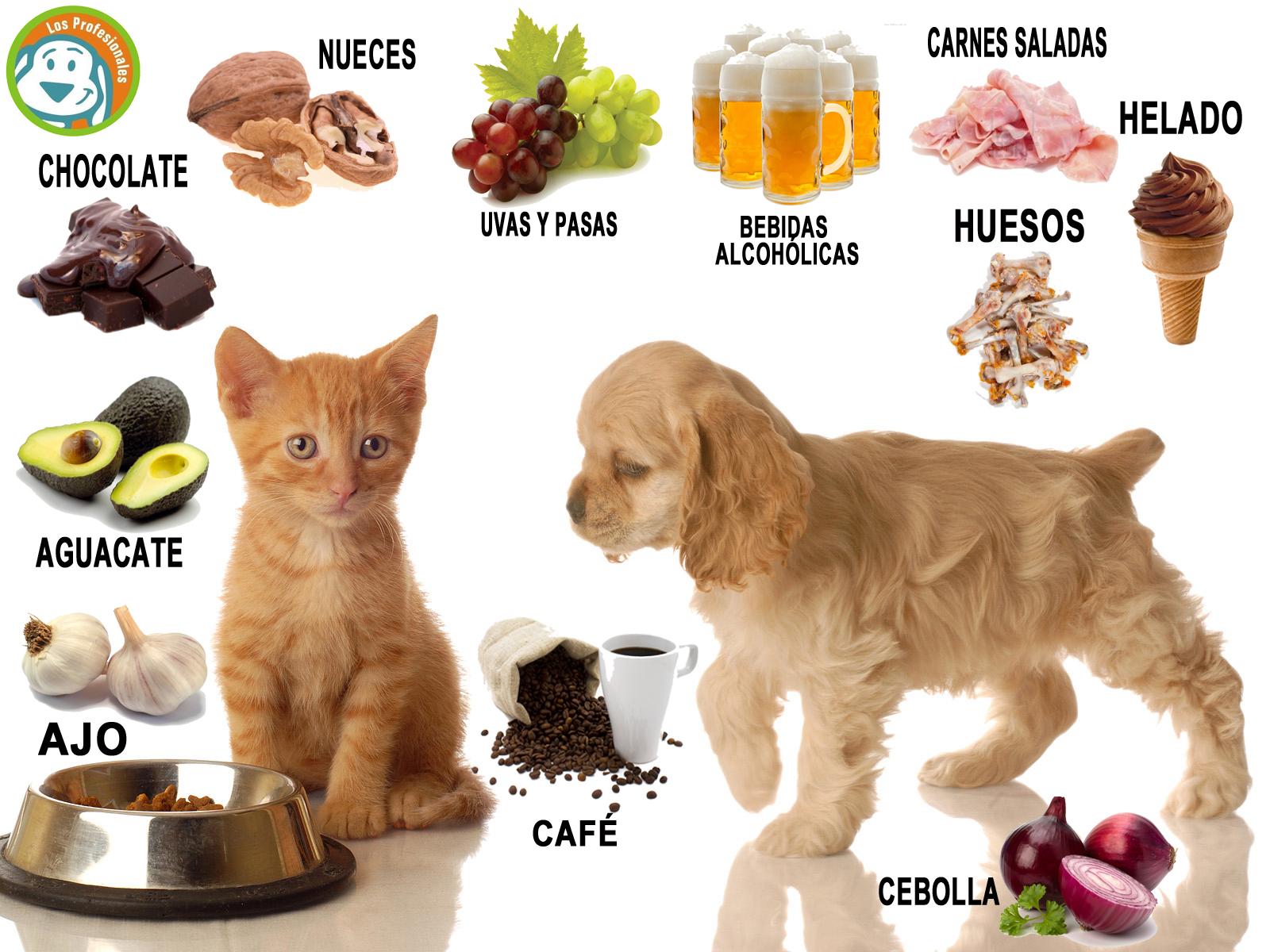 El blog de bi logos y veterinarios alimentos da inos para nuestras mascotas - Alimentos recomendados para perros ...
