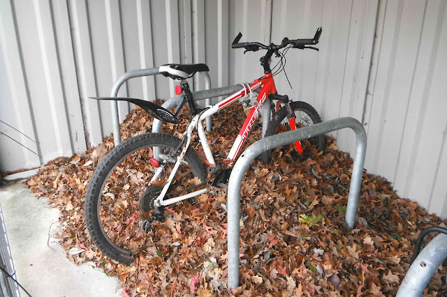 Bicycle under leaves in bike-shed
