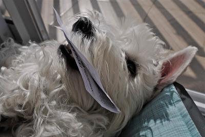 foto Leica como cachorro redecard