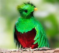 Primeros rumores sobre Ubuntu 12.10 Quantal Quetzal