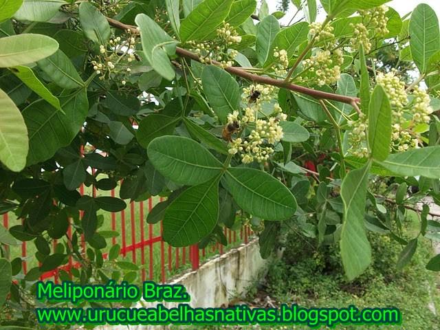 Tipos De Plantas Rasteiras httpurucueabelhasnativasblogspotcom