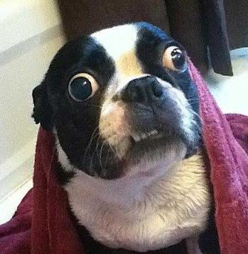 Goggle-eyed dog