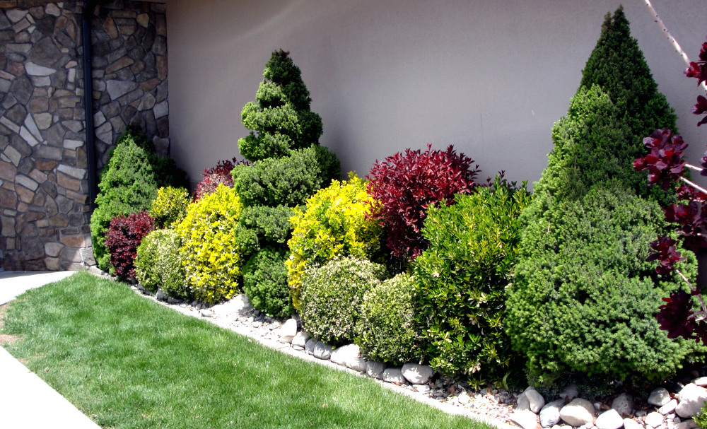 Great basin natives three favorite shrubs for Great small trees for landscaping