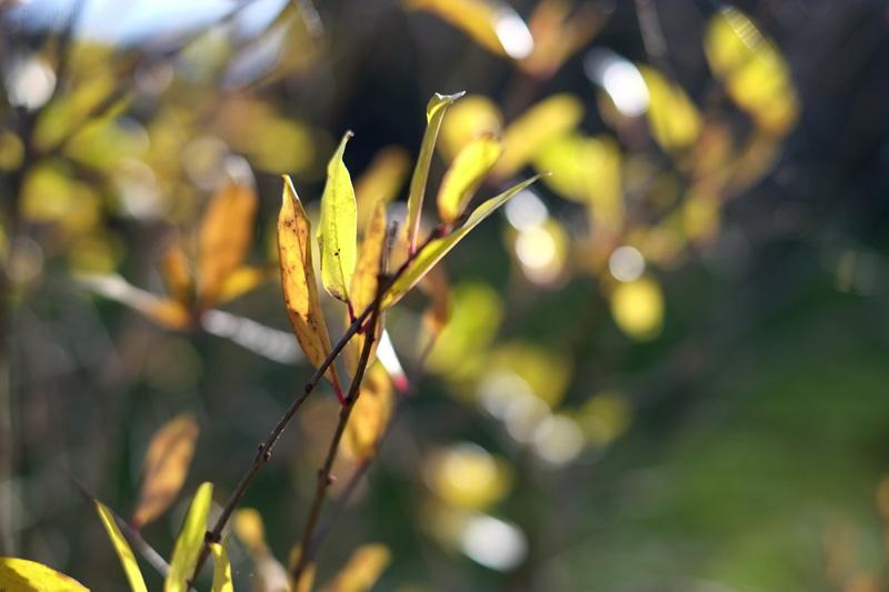 Foglie gialle in autunno
