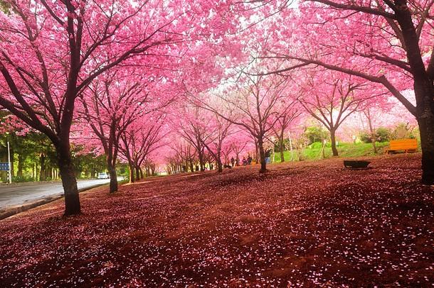 Good morning Sakura