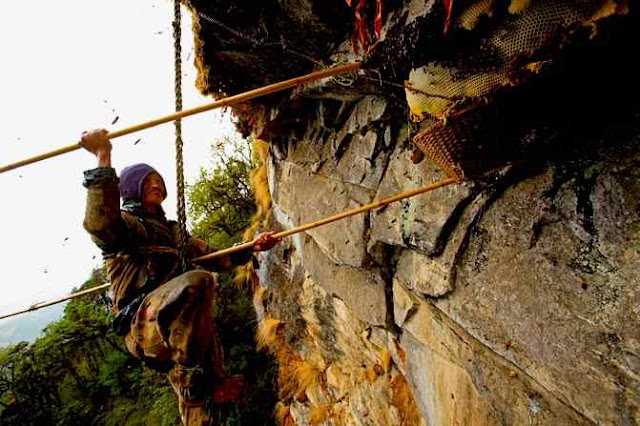 Strathcona Beekeepers: The Honey Hunters of Nepal
