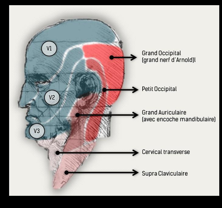 Et un peu de Neurologie: Céphalées dites d'Arnold et autres ...