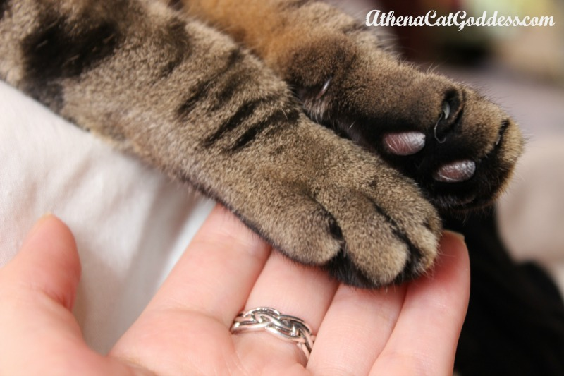 paw to hand connection