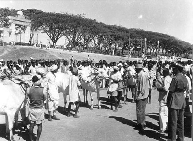 वर्तमान केंद्रीय बस स्टैंड (मैजेस्टिक, सुभाषनगर) 1960 के दशक की शुरुआत में जब धर्मम्बुदी टैंक के झील के बिस्तर पर मेले और प्रदर्शन आयोजित किए गए थे। धर्मंबुडी टैंक मैदान - 1960 की शुरुआत में