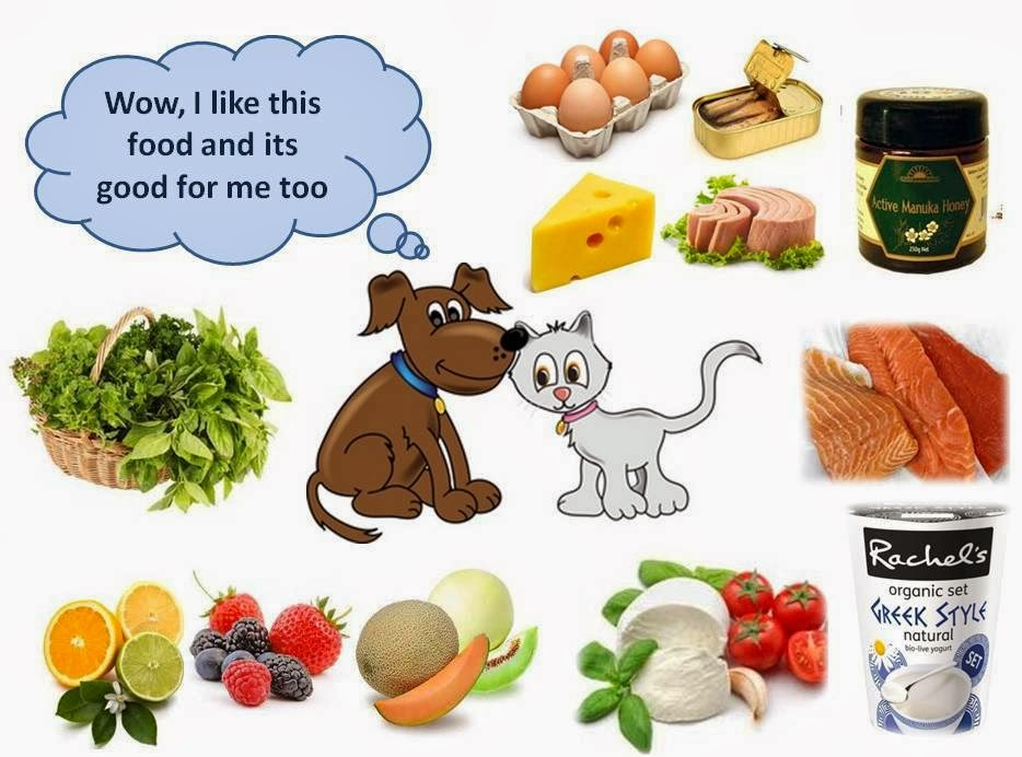 Dogs Seizures Causes Food