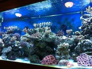 Giant Aquariums: 300 gallon Salt water aquarium fully ...