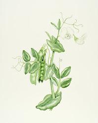 Ilustradora Botánica y Post Naturalista