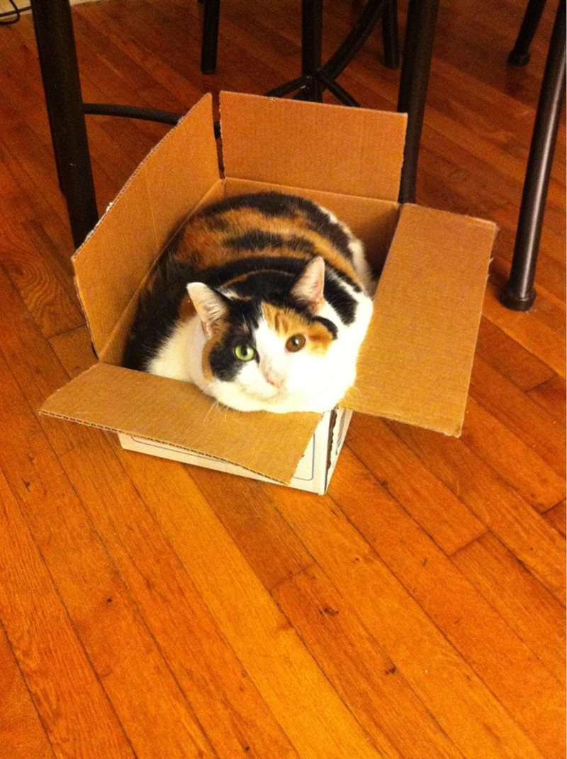 funny cat pictures, fat cat in box