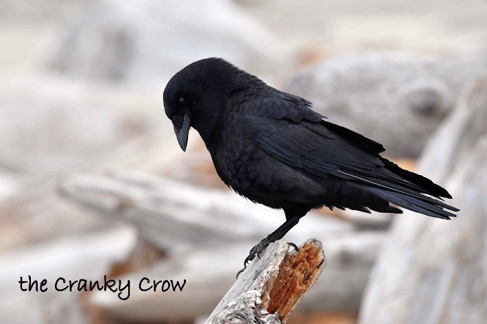 The Cranky Crow