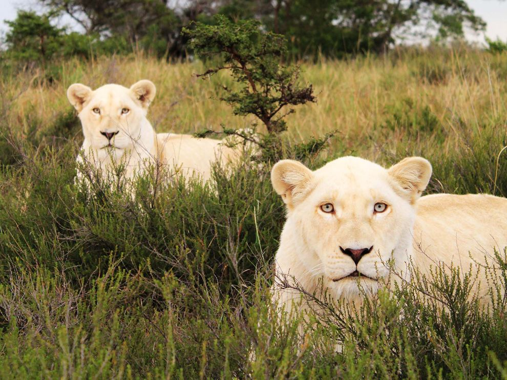 Beautiful dangerous wild animals pets of Africa: Beautiful dangerous