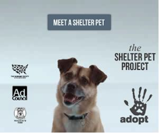 http://theshelterpetproject.org/