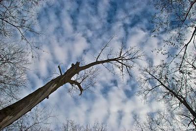 Cielo desde un parque de Târgu Jiu, Rumania. Donde hay esculturas de Brancusi.