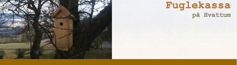 Fuglekassa på Hvattum
