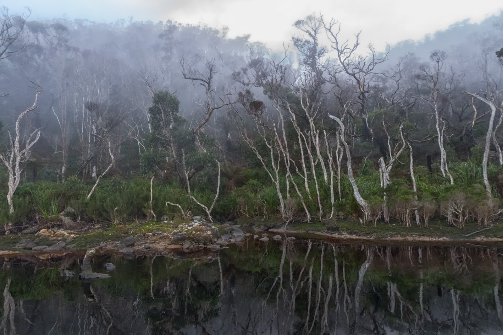 mist over miranda creek wilsons promontory