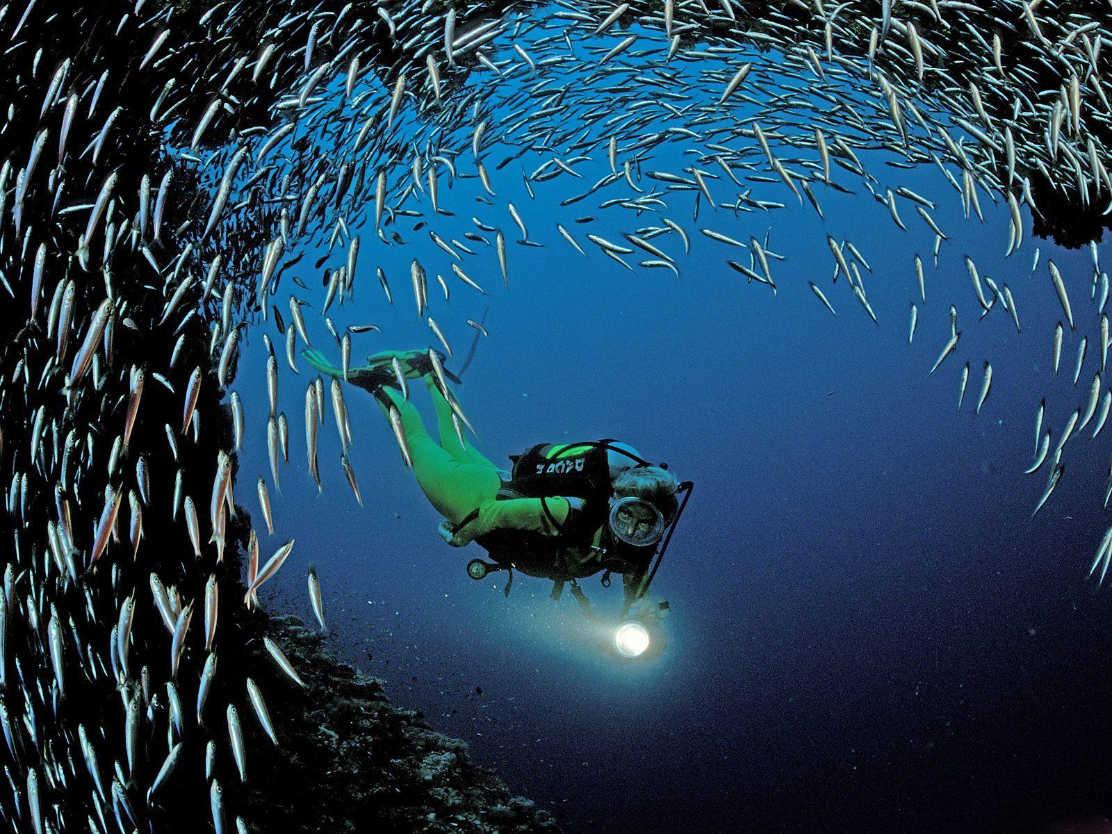 http://4.bp.blogspot.com/-y9JyNLbomLg/TkrKj7ZYAUI/AAAAAAAALjg/DmKSgit3hc8/s1600/Underwater+Wallpapers+%25284%2529.jpg
