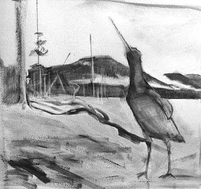Study for the Oystercatcher, by Kathy Hodge, Chugach NF aritst in Residence