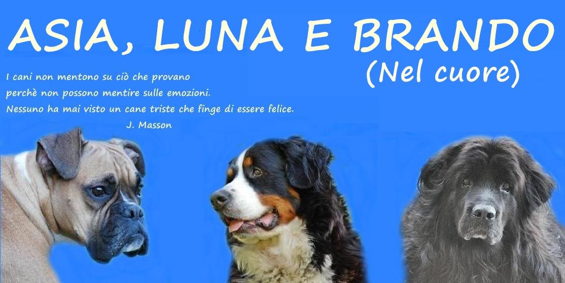 Favoloso BOXER, BOVARO BERNESE, TERRANOVA: Aforismi e frasi celebri sui cani SE53