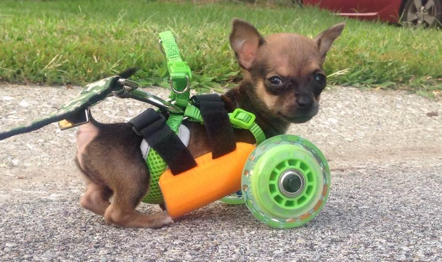 3Dプリンターによって一匹の犬が救われた話