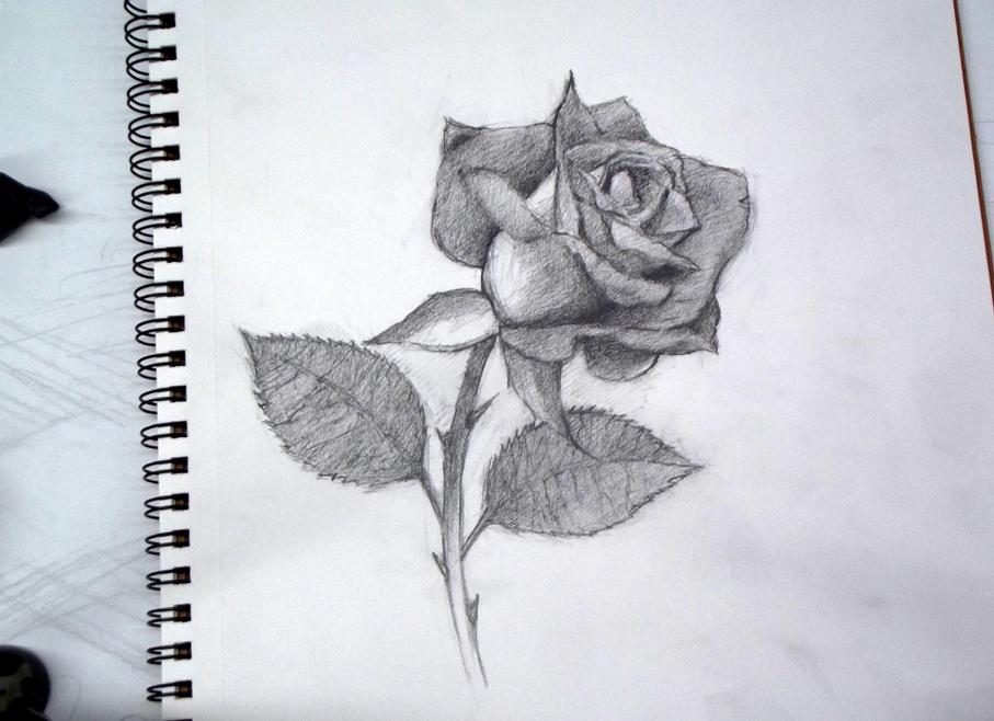 Dibujando rosas: cómo dibujar una rosa en 3D - Arte