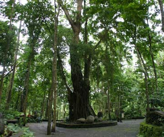 The forest of Monkey Forest ubud