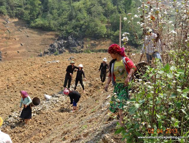 Parc géologique du Plateau calcaire de Dong Van - Ha Giang