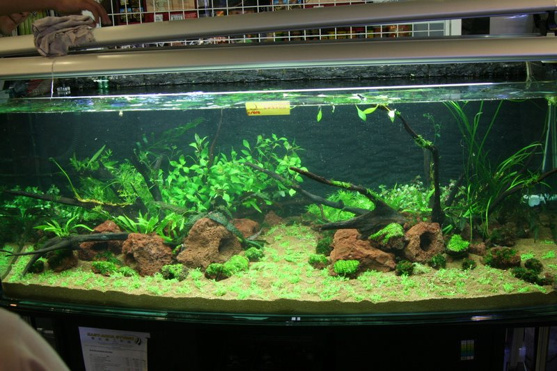 creativeDesign: Steps in designing aquascape
